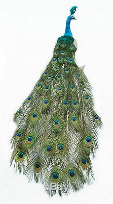 60 inch Long Feather PEACOCK Bird in NATURAL color, Handmade, Head Left/Right